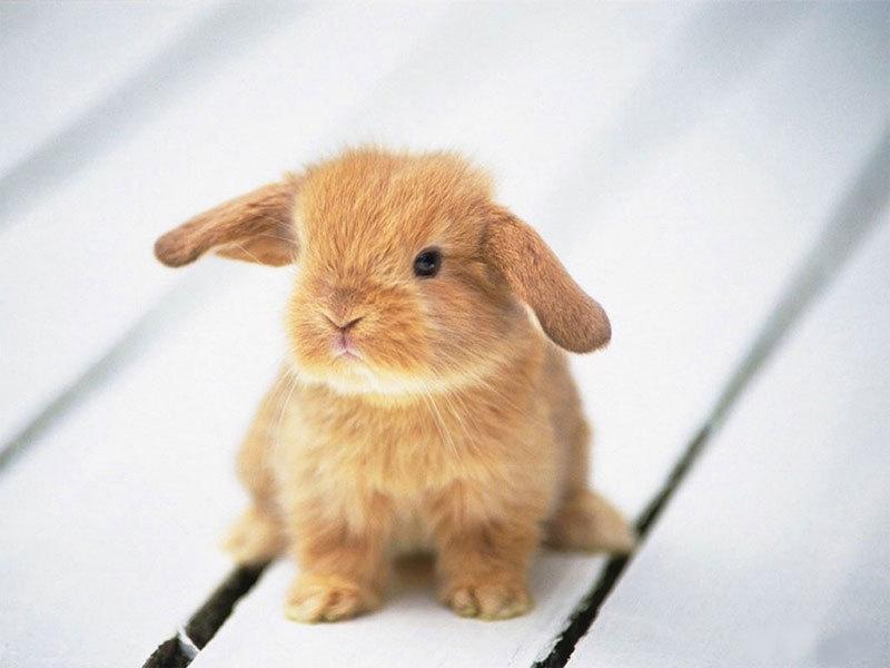 Animaatjes konijnen 525837