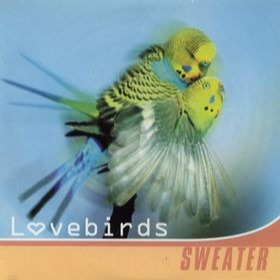 Sweater lovebirds s