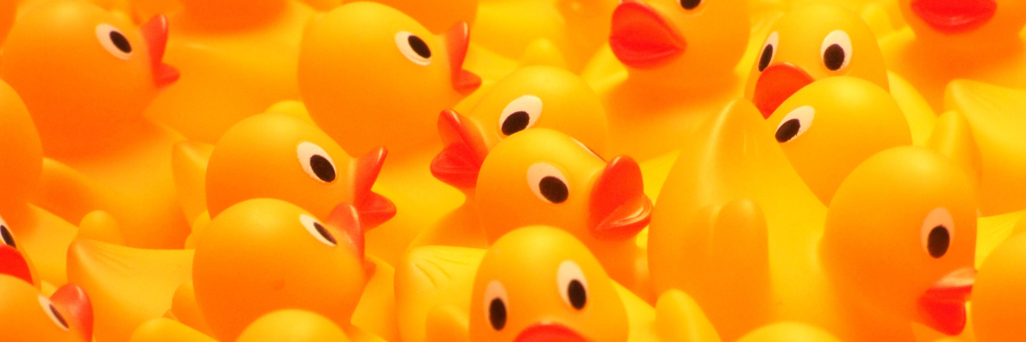 Rubber duckies so many ducks