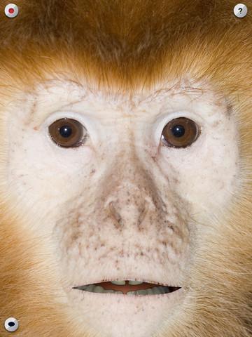 Sprekende aap app