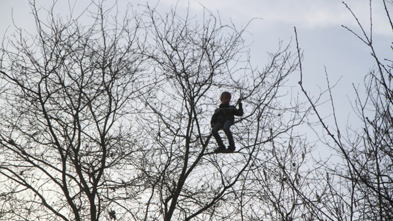 Brandweer ter plekke om jongen uit boom te halen foto saskia kusters sk media