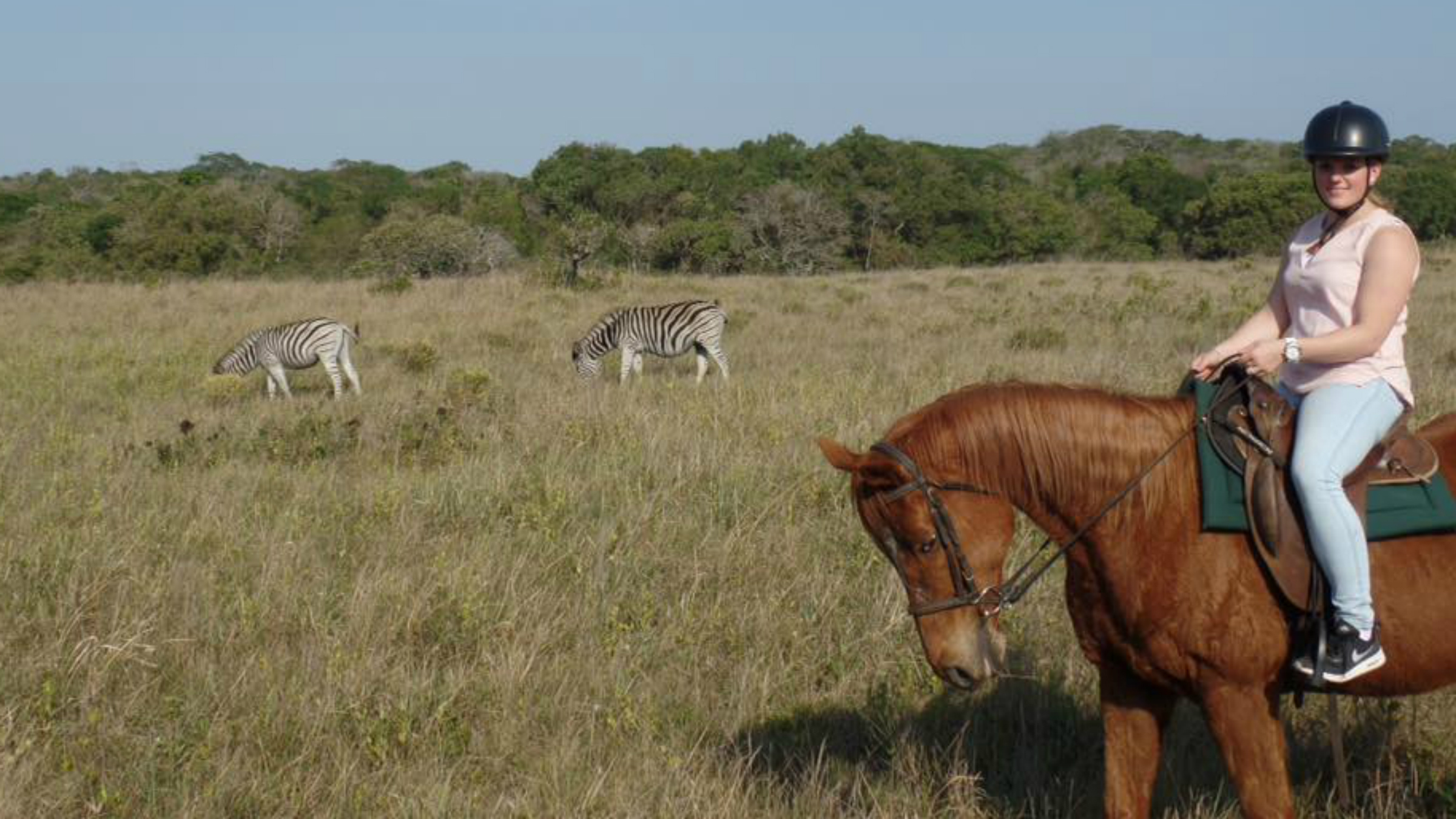 Paardensafari zuid afrika 2400x1350