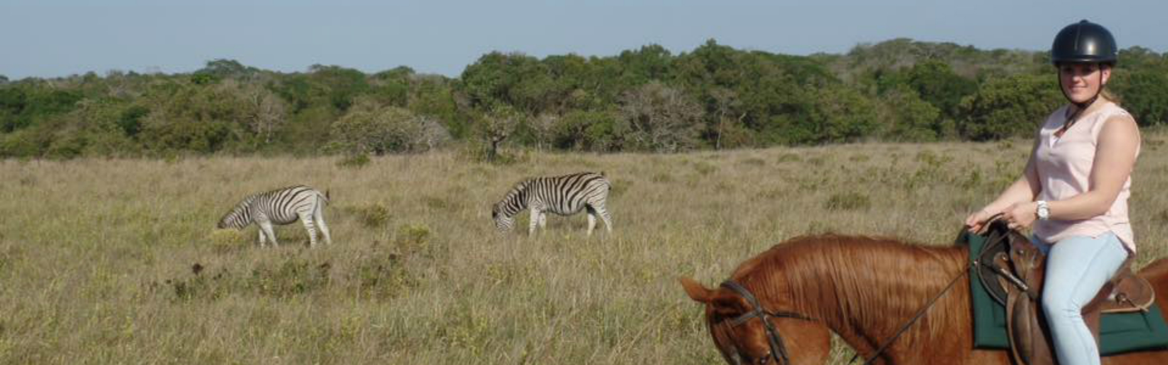 Paardensafari zuid afrika 2400x750