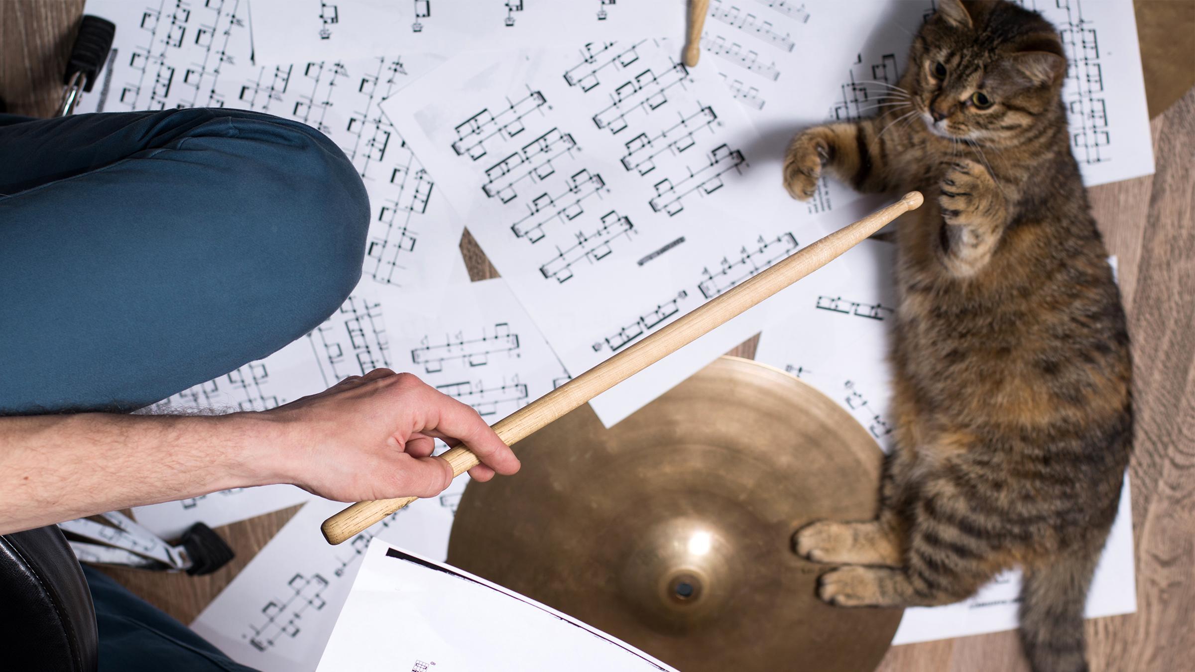 Kattenmuziek teaser